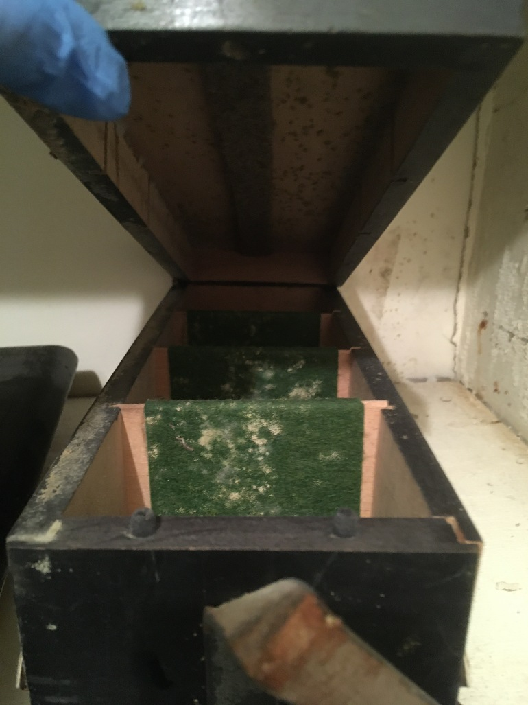 Brown box with white mould inside