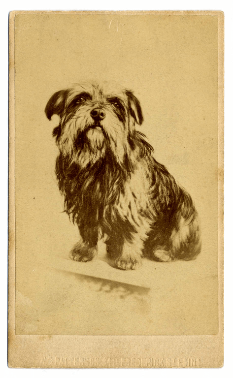 Sepia photograph by W. G. Patterson of Greyfriars Bobby