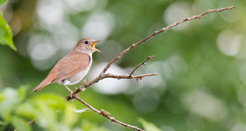 Nightingale Choir