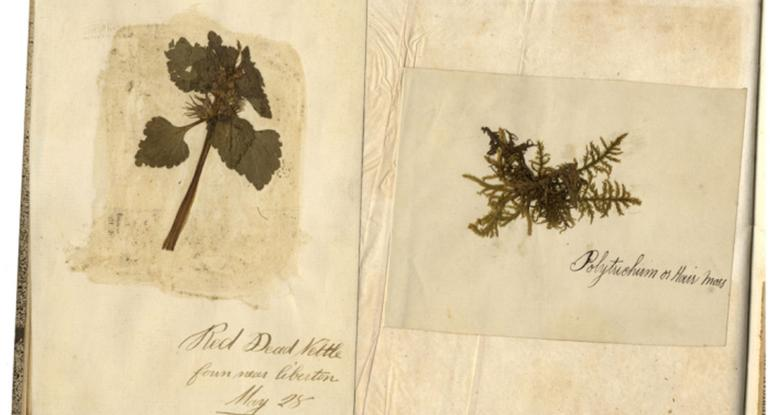 Scrapbook with pressed leaves
